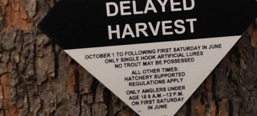 North Carolina's Delayed Harvest, We get some mileage from our fish in the south..